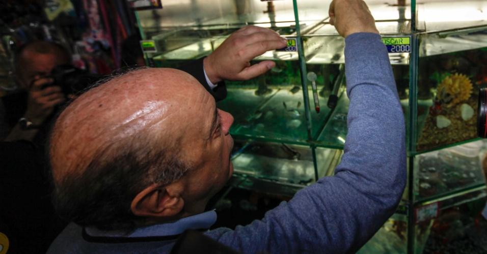 25.set.2012 - José Serra, candidato do PSDB à Prefeitura de São Paulo, alimenta peixes em aquário noMercado Municipal do Sapopemba, região leste da capital