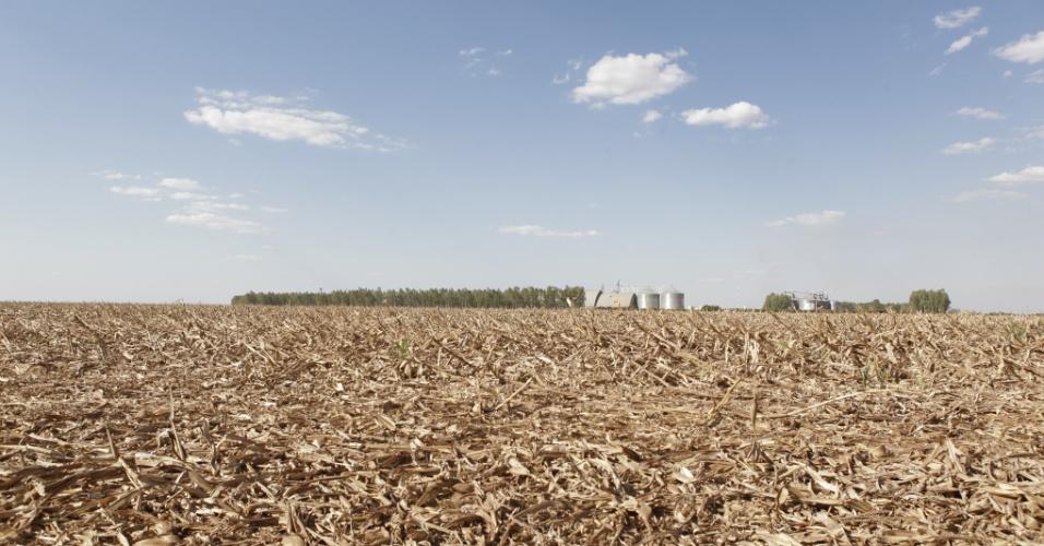 Campo de milho após a colheita da safra de meio de ano, também chamada de safrinha, que em 2012 bateu recorde de produção nacional em Sorriso (MT)